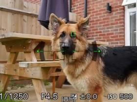 索尼发布A6400相机动物实时眼部对焦2.00版固件