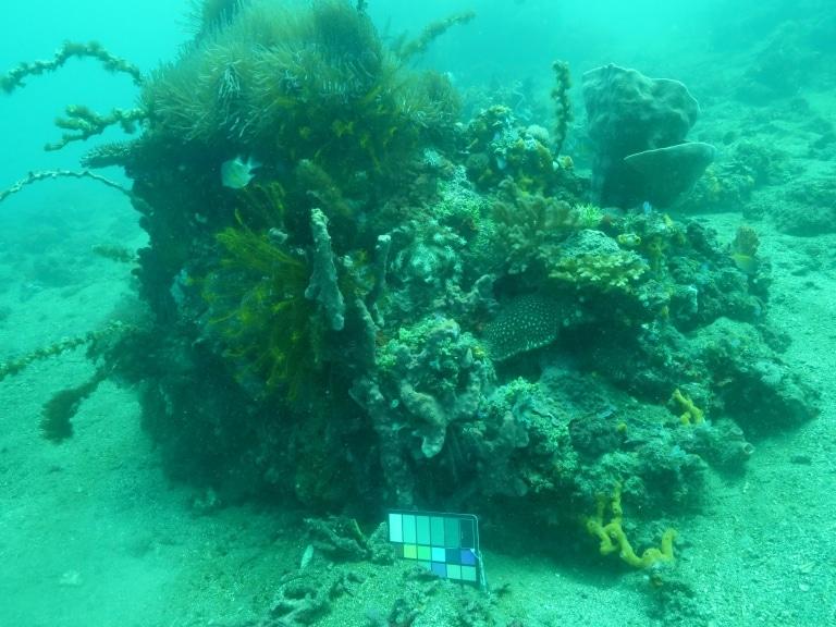 """工程师研发出可将水下照片中去""""水""""的新技术!"""