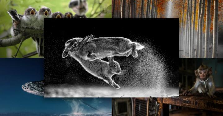 """""""跃兔""""照片在2019年度荷兰国际自然摄影年赛获得最高奖"""