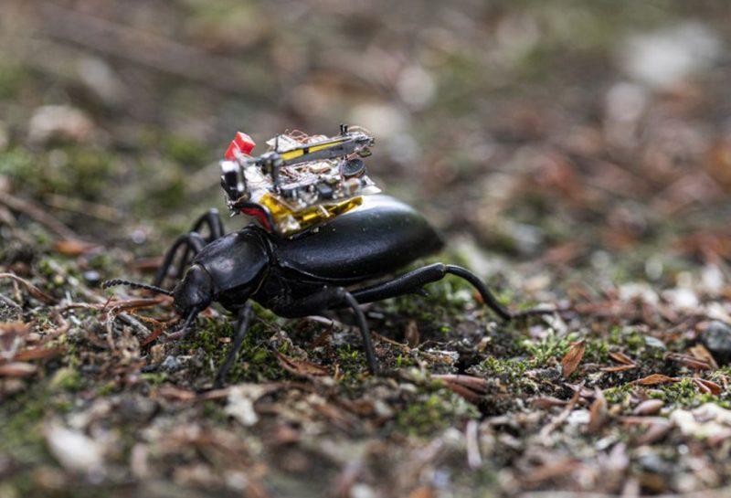 一款甲壳虫相机?!